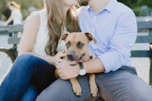 Dog sitting on couples lap